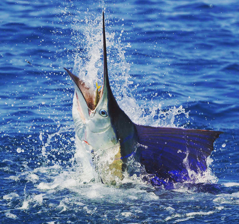 Bluewater-fishing-charter-broome