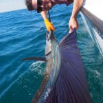 P6020105 150x150 Sailfish have been absolutely rampaging for our fishing charters off Broome!